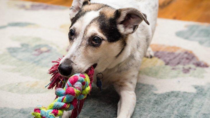 犬の散歩に行けない時におすすめ!家でできる『ストレス発散法』3選