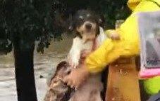 ハリケーンで洪水が発生。3日間水につかっていた犬の叫びが届いた!