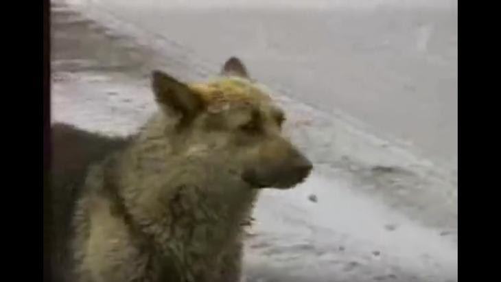 お空の飼い主を待ち続ける1匹の犬…ロシアの忠犬ハチ公物語