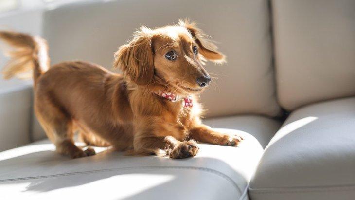 『好奇心旺盛な犬種』4選!やんちゃな子が多い犬の種類って?