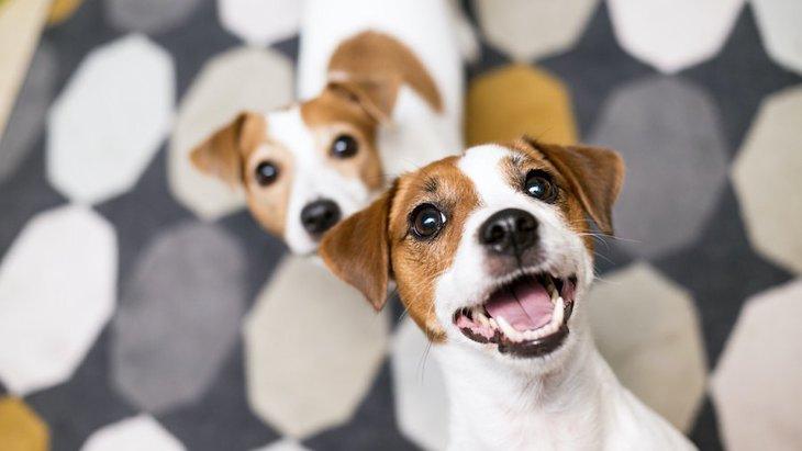 多頭飼いを考えている人必見!犬同士の「相性」を診断するチェック項目4つ