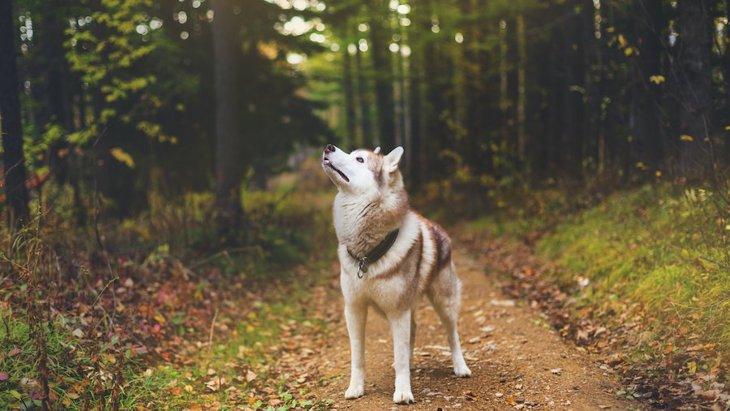 犬を飼っているとよくある『不思議なこと』5選