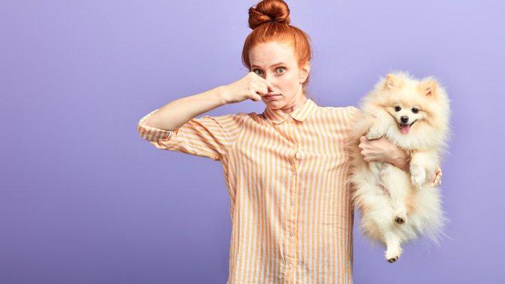 犬の『体臭』が臭い原因3つ!改善方法や病気の可能性を解説