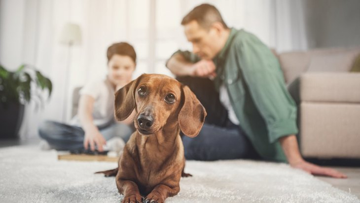 犬が飼い主から離れて座るときの心理5つ