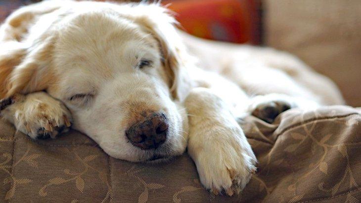 犬が年を取るとできなくなること5選