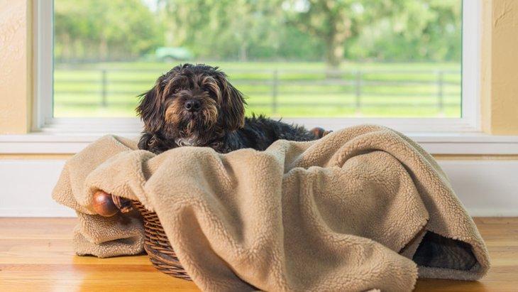 犬が巣作りをするときの仕草とその意味について