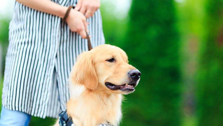 犬が外でキョロキョロしているときの心理3つ