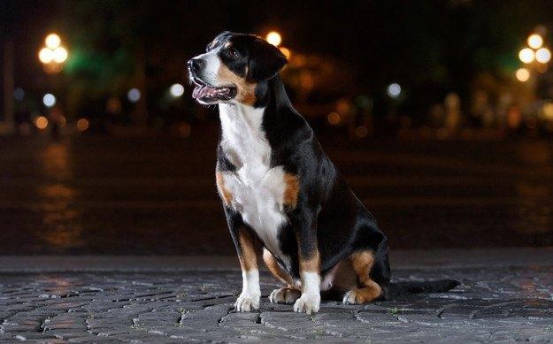 犬と夜のお散歩をする時に絶対してはいけないNG行為5選