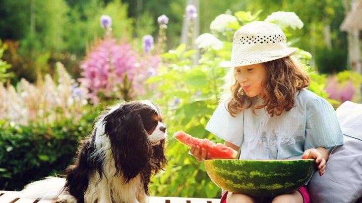 犬にスイカを食べさせても大丈夫?栄養や効果、与える量や注意点について