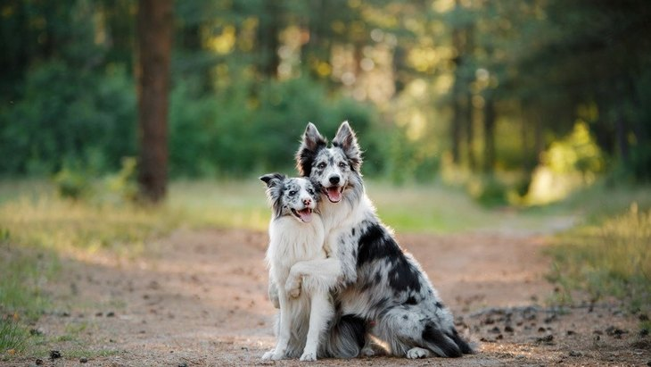 先天性感覚障害のある犬が持っている素晴らしい可能性【研究結果】
