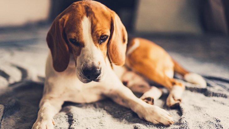 犬はストレスを溜めすぎるとどうなるの?