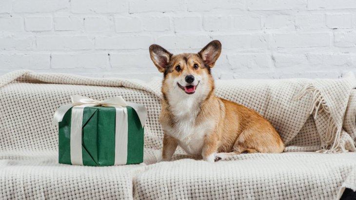 犬が喜んでくれる『プレゼント』4選!気持ちに寄り添ったものを意識してみて?