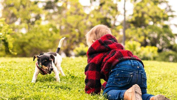 犬が『拒否』している時に見せる仕草や態度5選
