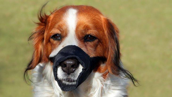 犬にとって「口輪」はどのくらいストレスなのか?
