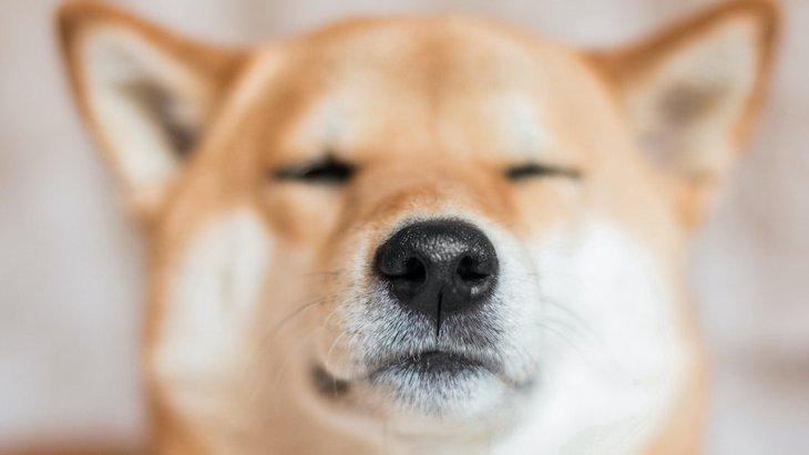 犬のヒゲは触っても大丈夫?嫌がる時の理由3つ