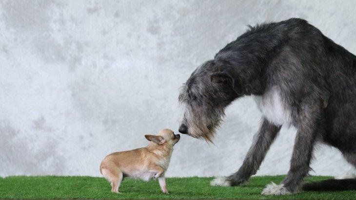 小型犬と大型犬の多頭飼いはできる?注意点は?