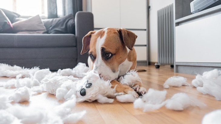 犬がコレをしていたらすぐに止めて!超危険な『5つの行動』