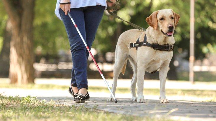犬の『寿命』は犬種により異なる?長生きしてもらうためのコツは?