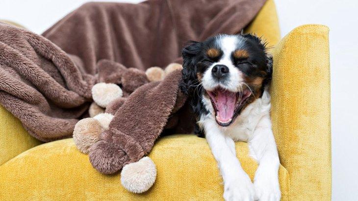 犬は寝るとき、明るい方がいいの?暗い方がいいの?