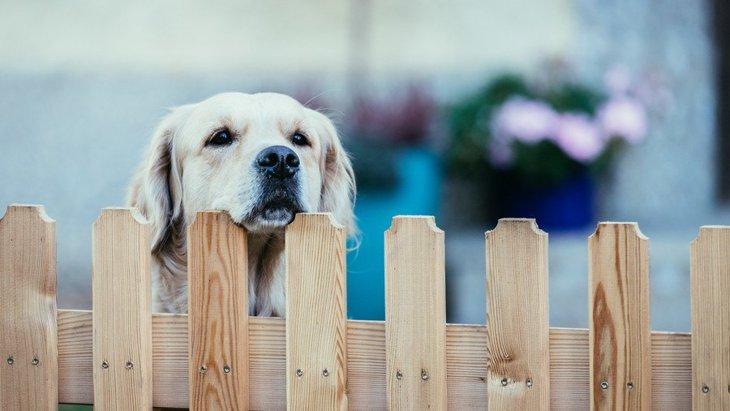 犬が通り過ぎる人に反応してしまう理由4つ!やめさせる方法は?