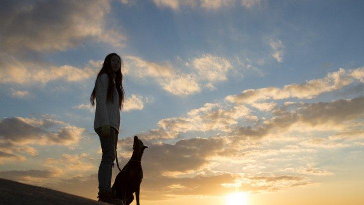 犬はなぜ死に際に飼い主から離れたがるの?4つの心理を解説