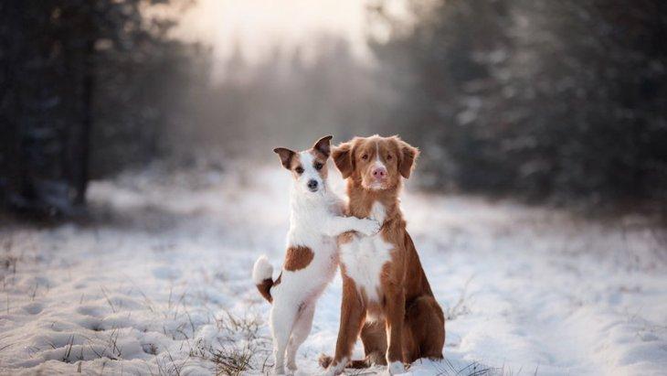 冬は犬に服を着せたほうが良いの?