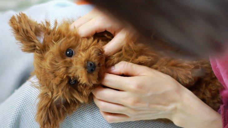 犬とスキンシップを取ってはいけない『NGタイミング』3選