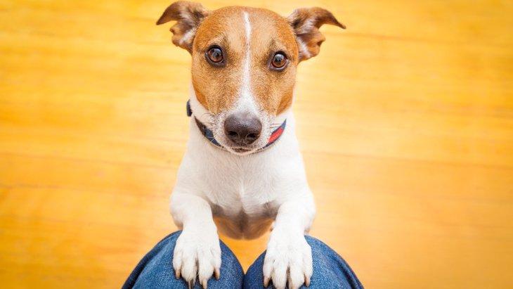 犬が要求を必死で伝えている時のしぐさ7選