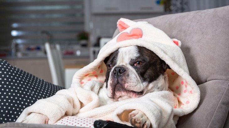 犬は『テレビ』をどう認識している?現実のものとの区別はついているの?