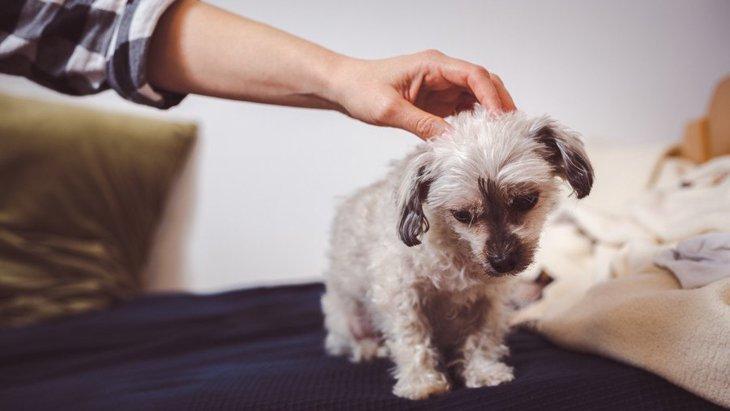 犬を飼い始めた人がやりがちなNG行為3選!飼う前に必ず確認しておくべきこととは?