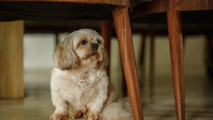 犬が家の中でよく隠れている場所4選!あなたの愛犬はどんな場所が好き?♡