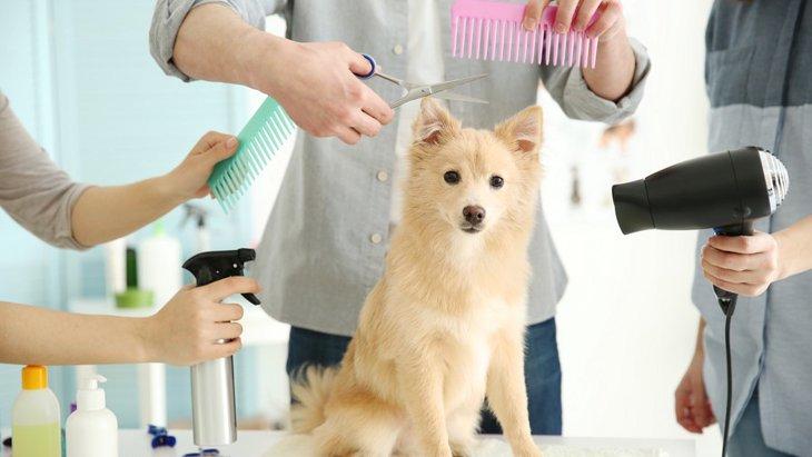 犬用ドライヤーのおすすめ商品6選!選び方から注意点まで