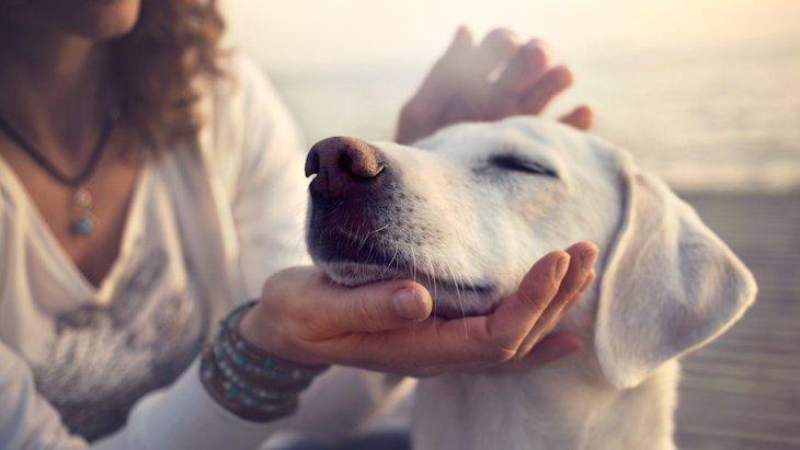 犬にとって飼い主に触ってもらうメリット4つ