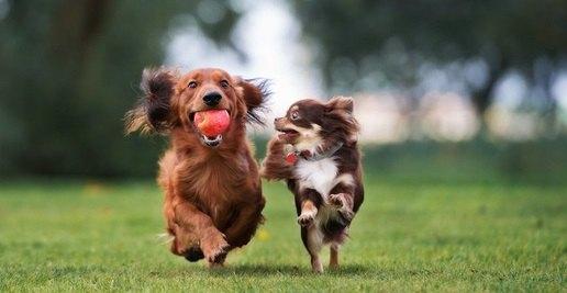 犬のリードを絶対に外してはいけない場面5選
