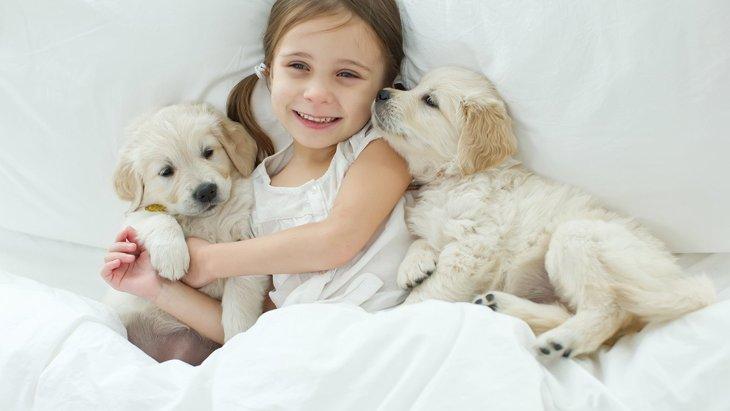 犬が飼い主に『カワイイ仕草』をする4つの理由