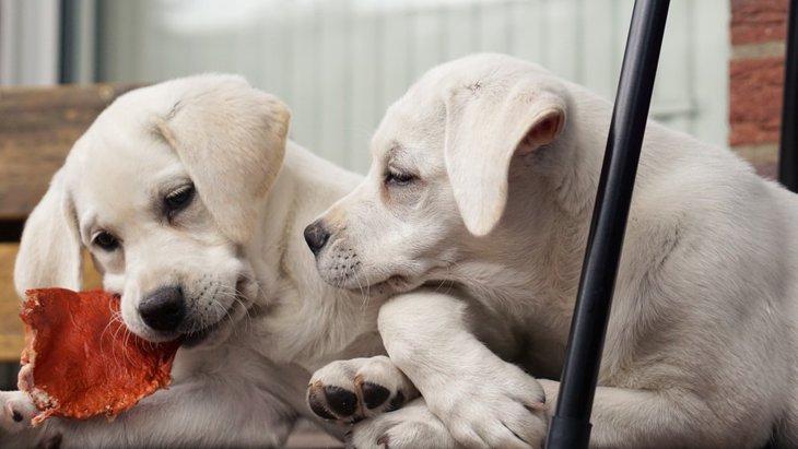 嫉妬心が強い犬の心理