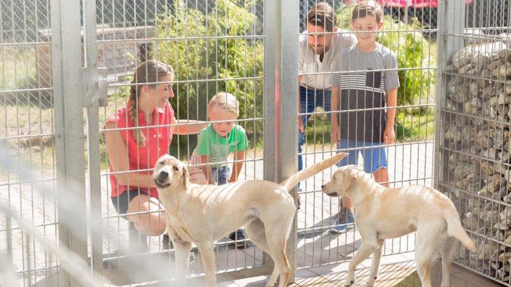 保護犬のリホームを科学的な面からサポートするプロジェクト【イギリス】