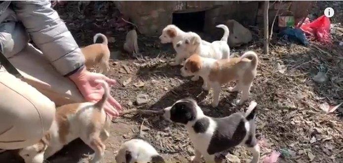 巣穴に隠れていた野良犬の赤ちゃん8匹を発見!