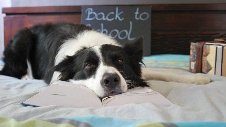 犬が疲れている時に考えられる4つの原因