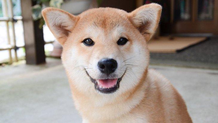 犬が飼い主にする『優しい行動』5選!こんな経験、あなたにもありませんか?