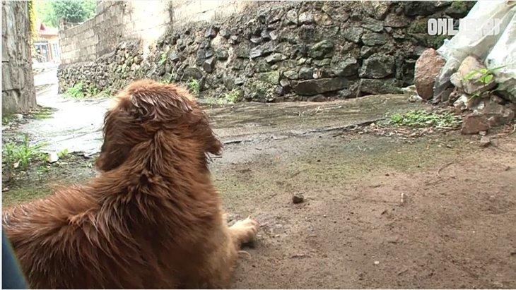 飼い主さんの命を救ったのに、独りぼっちで取り残された犬