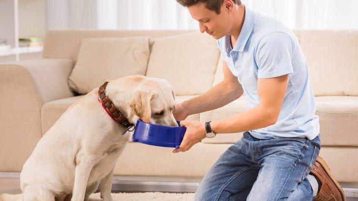 食欲が減ってきた老犬にご飯を食べさせる方法5選