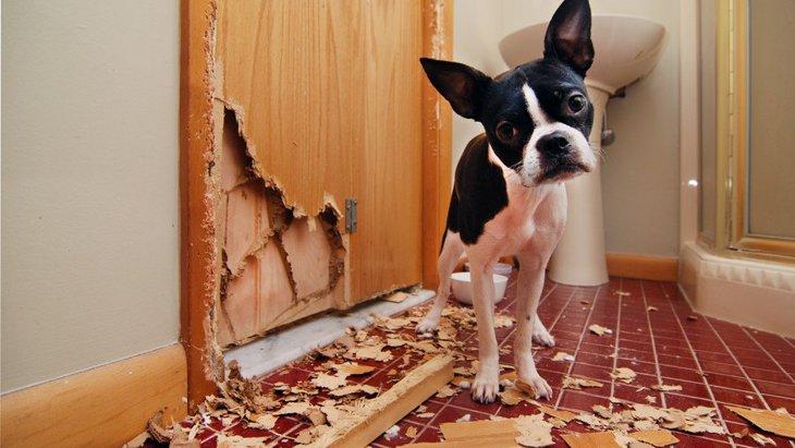 犬が家の中で壊しがちなもの5つ