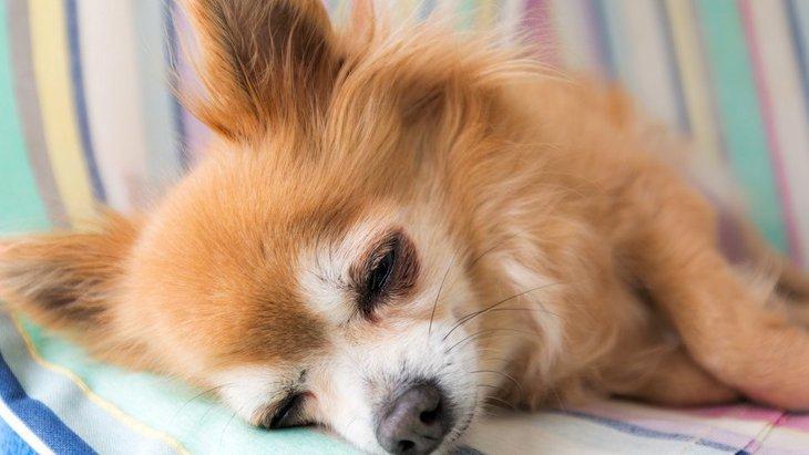 犬が『急死』する代表的な原因8選