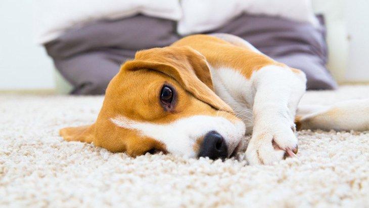 犬のてんかんに効く薬と治療法 その症状や原因、予防法まで