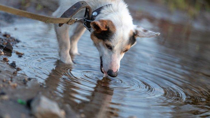 知っておきたい『犬と人の共通感染症』9つ