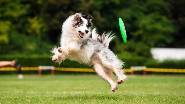 あなたの愛犬はどう?不器用な犬がよくしている行動4選