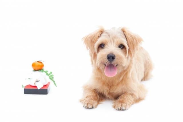 犬に餅を与えても大丈夫?食べて良いもの悪いもの