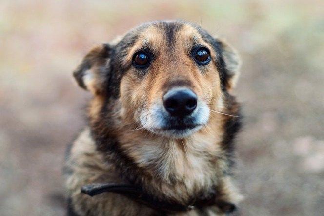 犬が死亡する『思わぬ事故』4選!未然に防いで愛犬の命を守ろう