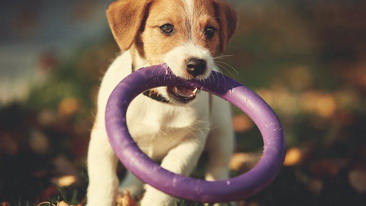 遊びを通してできる犬へのしつけ2つ